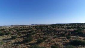 Materiał filmowy Kalahari zbiory wideo