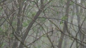 Materiał filmowy podeszczowa prysznic w lesie Tajlandia zbiory