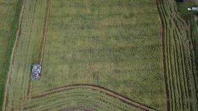 Materiał filmowy w Rice gospodarstwie rolnym na zbierać sezon rolnikiem z syndykatów żniwiarzami zbiory wideo