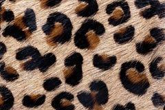 Materiał w zwierzęcej skóry wzorze, tło zdjęcie royalty free