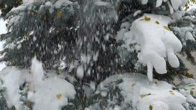 Materiału filmowego śnieg spada od jodły Zwolnionego Tempa 120 fps zbiory wideo