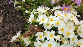 Materia? filmowy pi?kni kolorowi kwiaty kwitnie w wiosna ogr?dzie Dekoracyjny kolorowy kwiatu okwitni?cie w wio?nie zbiory wideo