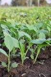 Materia orgánica vegetal fotos de archivo