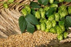 Materia prima per produzione della birra Immagine Stock