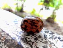 materiał siewny gumowych Fotografia Stock