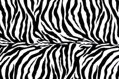 Materia textil de la cebra Imagen de archivo
