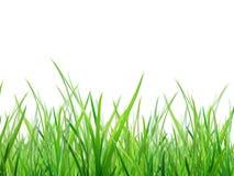 Materiał trawa obrazy stock