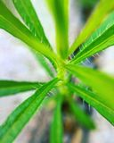 Materia verde Fotografie Stock Libere da Diritti