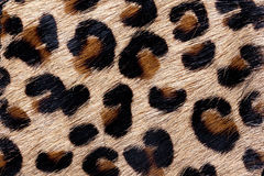 Material in animal skin pattern, a background. Or texture Royalty Free Stock Photo