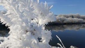 Material congelado Fotos de Stock