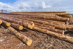 Material de construção de madeira da madeira para o fundo e a textura madeira verão, céu azul cru indústrias Foto de Stock Royalty Free