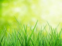 Material of grass Royalty Free Stock Photo