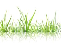 Material of grass Royalty Free Stock Photos