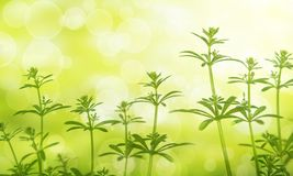 Material of grass. It is a herbal background image stock photos
