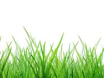 Material of grass Stock Images