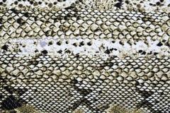 Material i modeller för djur hud, en bakgrund arkivfoton
