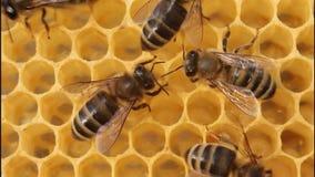 Material ist ein Wachs, dass sie Honig produzieren stock video