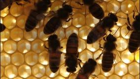 Material ist ein Wachs, dass sie Honig produzieren stock video footage