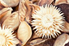 Materiale asciutto naturale dei potpourri dei fiori per la decorazione Fotografia Stock Libera da Diritti