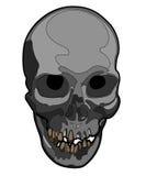 Materiale illustrativo del cranio di vettore Fotografie Stock Libere da Diritti