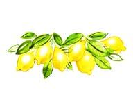 Materiale illustrativo dell'acquerello del ramo del limone Fotografia Stock