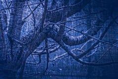 Materiale illustrativo nello stile della pittura, legno triste nei toni blu scuro Immagine Stock Libera da Diritti