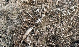 Materiel av avfalls av metaller arkivfoto