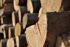 Materiel av trä för konstruktion Royaltyfria Bilder