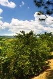 Materielbild av den Croydon kolonin, Jamaica Royaltyfri Bild