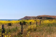 Materielbild av Kaliforniens centrala kust, stora Sur, USA Arkivfoto