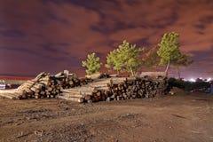 Materielet av trä loggar in lumbermill Royaltyfri Bild