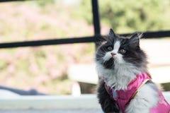Materielfoto - förtjusande skämtsamma Cat Chinese New Years Arkivbilder