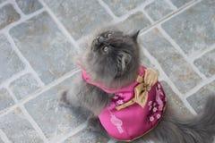 Materielfoto - förtjusande skämtsamma Cat Chinese New Years Royaltyfria Foton
