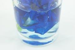 Materielfoto - fjäril Pea Flower i vatten i exponeringsglas Royaltyfri Fotografi