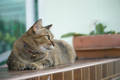 Materielfoto - katt som söker efter någon Fotografering för Bildbyråer