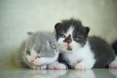 Materielfoto - nyfött se för katter Royaltyfri Foto