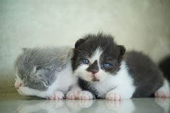 Materielfoto - nyfött se för katter Arkivbilder