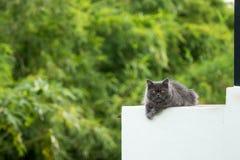 Materielfoto - pott på balkong royaltyfria foton