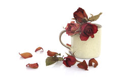 Materielfoto: röda torkade rosor i och ut ur den glass vasen isolerade nolla Fotografering för Bildbyråer