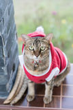 Materielfoto - Santa Ordinary Cat Selective Eye fokus Royaltyfri Foto