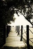 Materielfoto: Träbro i det sh mörkret för skogtappningfilter royaltyfri foto