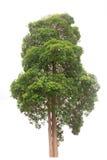 Materielfoto - träd som isoleras på vit bakgrund Royaltyfri Bild