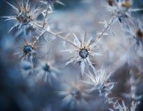 MaterielFoto växter av ryggar Royaltyfria Bilder