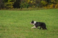 Materielhundkörningar som lämnas förgångna Autumn Colors Royaltyfri Foto