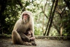 maternal förälskelse Arkivfoto