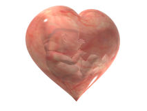 Maternal feelings. Symbol of a heart with Embryo Royalty Free Stock Photography