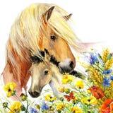 Maternidad del caballo y del potro ejemplo de los saludos del fondo Imagen de archivo