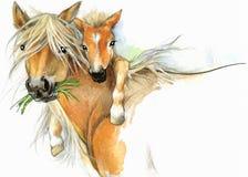Maternidade do cavalo e do potro ilustração dos cumprimentos do fundo Fotografia de Stock Royalty Free