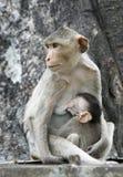 maternité Images stock