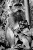 maternité Photo libre de droits